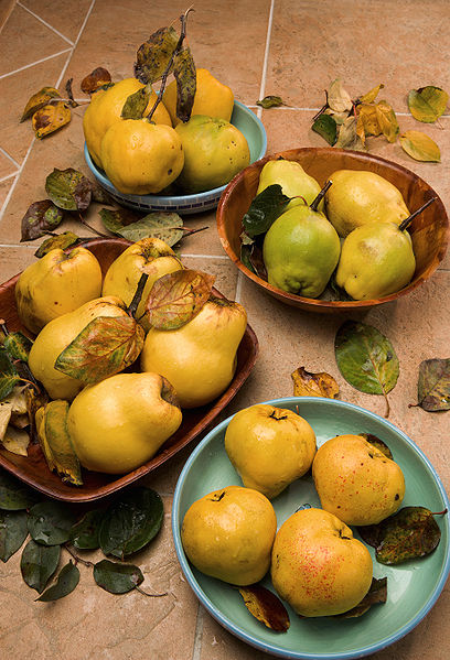 Quinces Ag Research