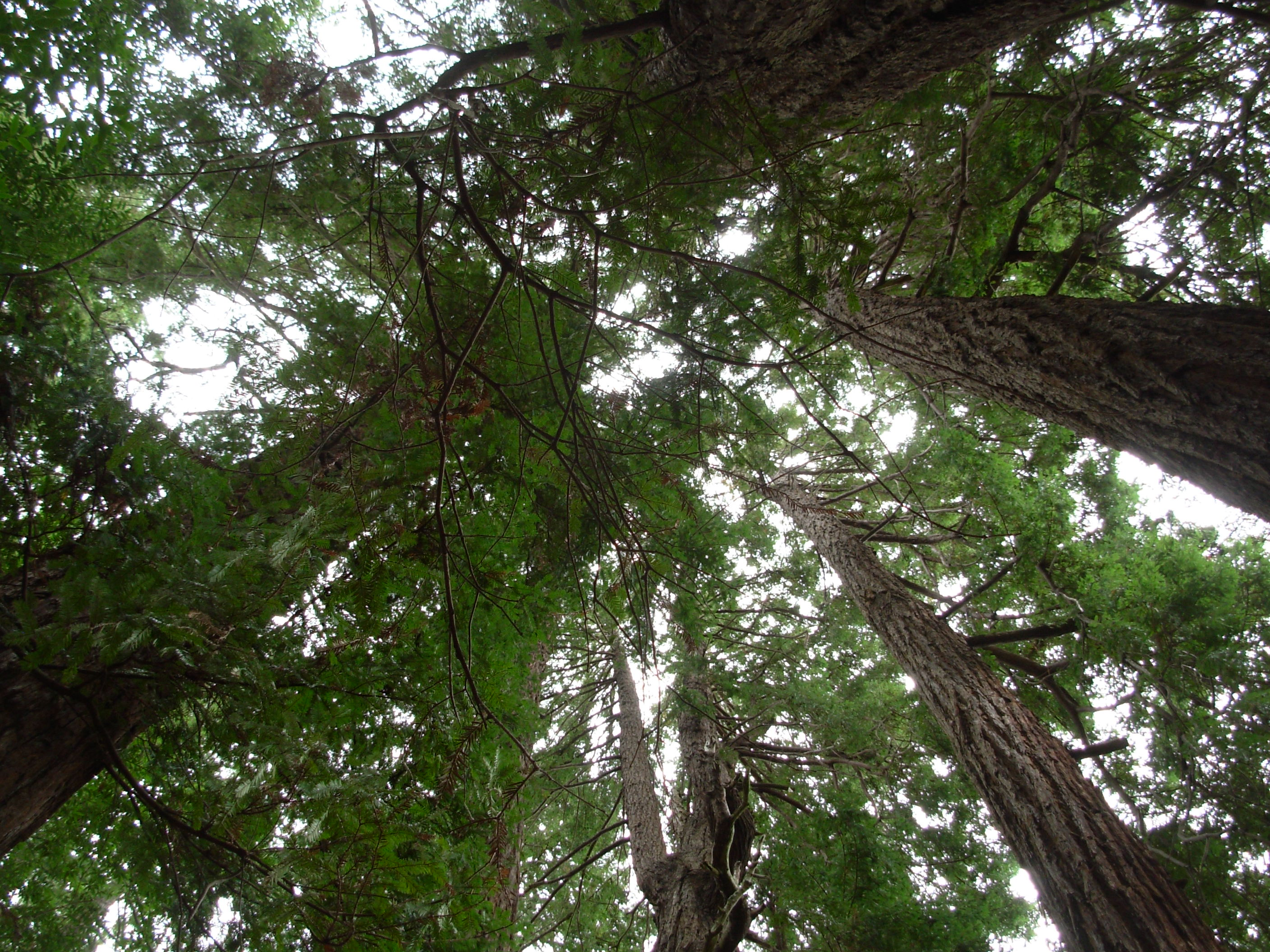 What is the thesis in a slow walk of trees