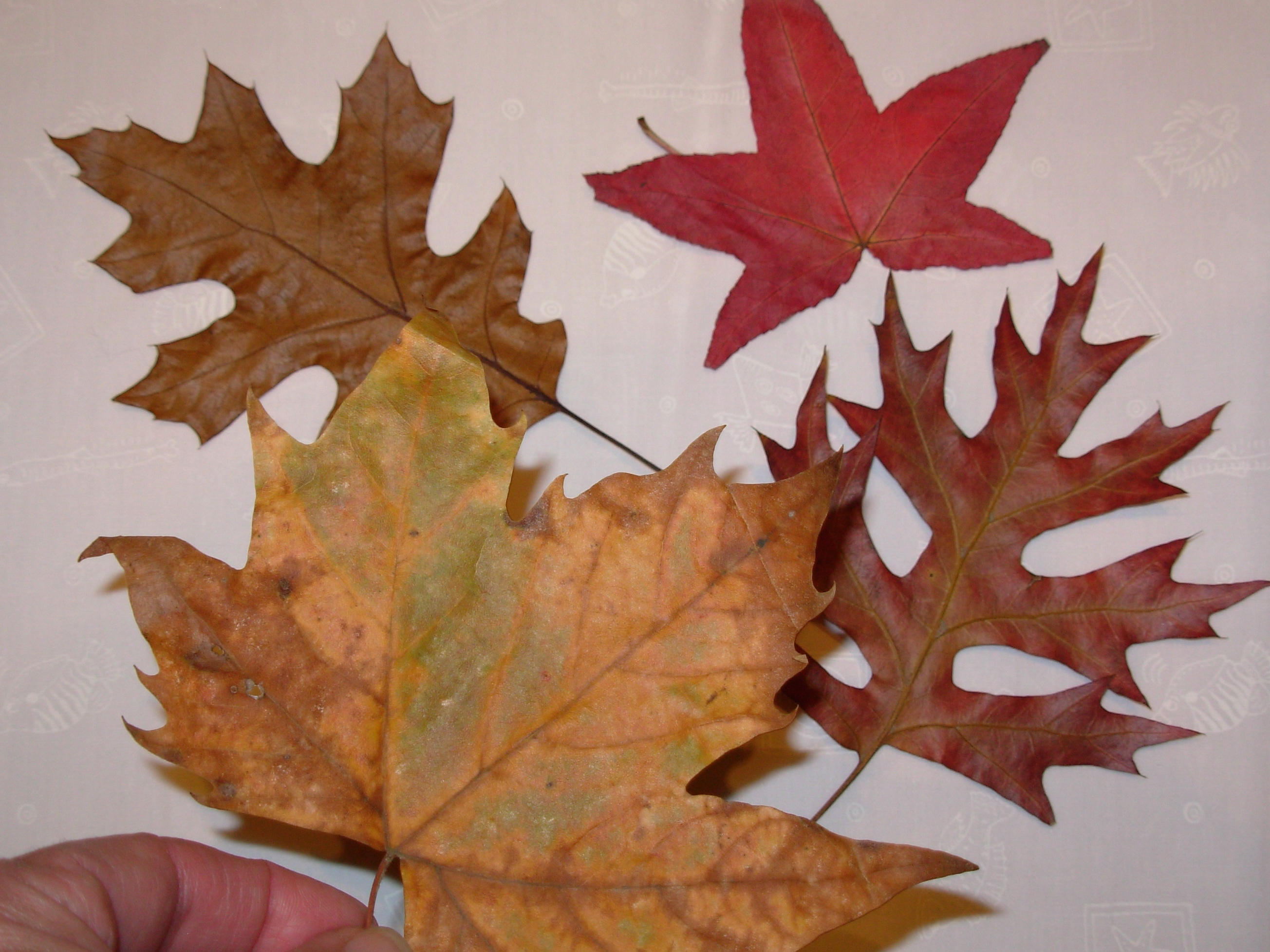 Make A Fall Leaf Placemat Slow Family